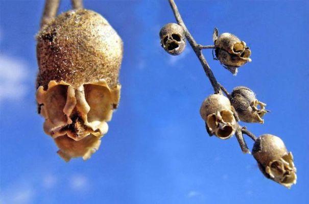 skull-flower-5e64e8b42487c.jpg
