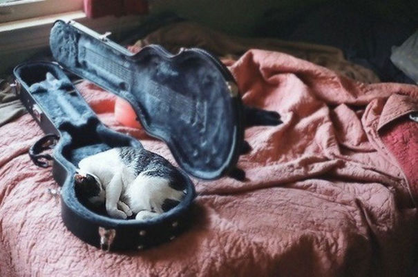 Cats-Sleeping-Strange-Places