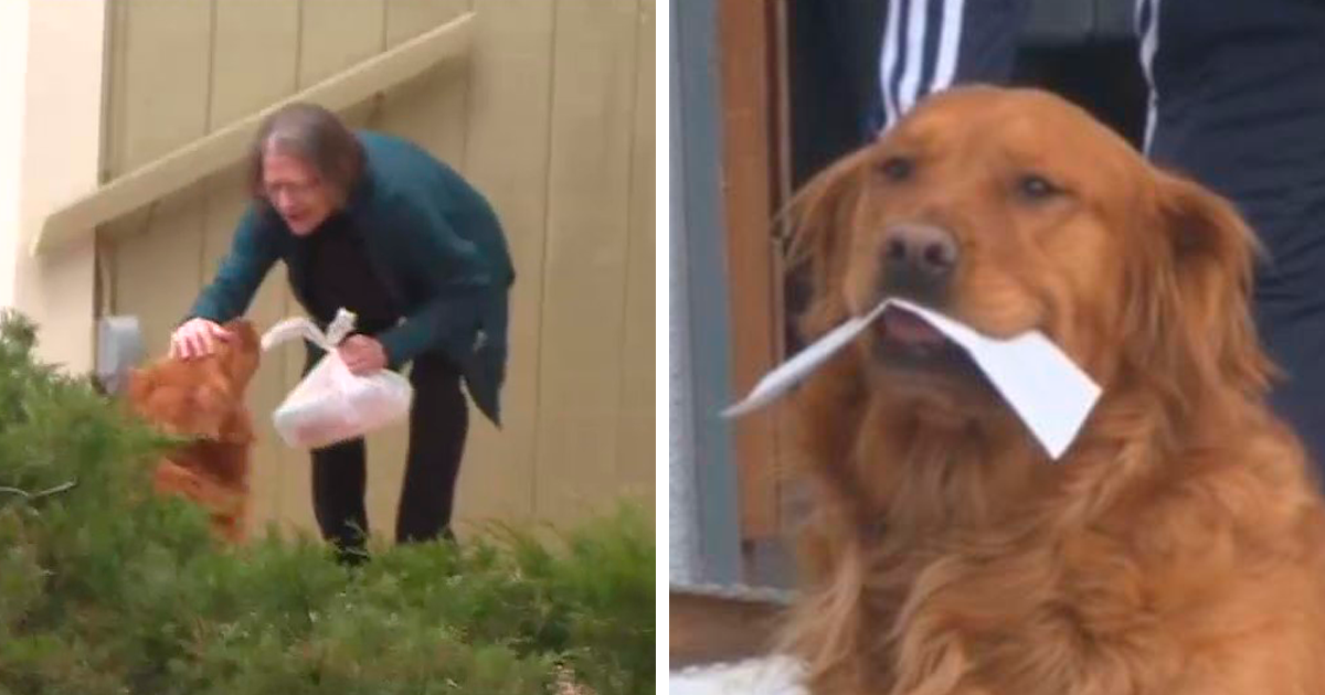 This Dog Named Sunny Is Delivering Groceries To His Elderly Neighbor With Respiratory Problems