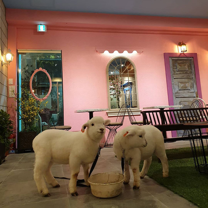 This Sheep Cafe In Korea Shares Viral Photos Of A Sheep Getting Washed