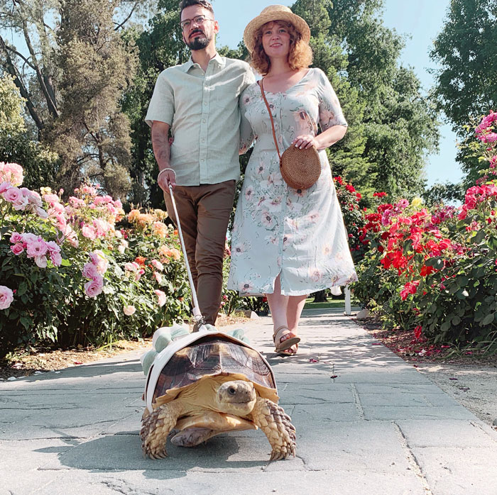 Couple Dress Their Pet Tortoise In Matching Outfits For Photos Many People Call Them Out For Animal Cruelty Bored Panda