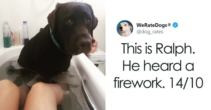 30 Times People Asked To Rate Their Dogs And Got Hilariously Wholesome Results (New Pics)