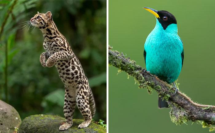 30 Beautiful Animals That I Found In Costa Rica