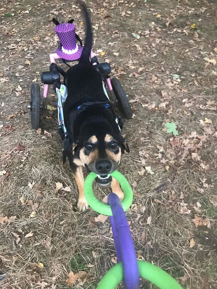 Woman Adopts 6 Dogs With Special Needs And Now They're All Living Their Best Lives