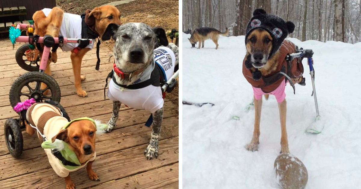 Woman Adopts Special Needs Dogs To Honor Her Late German Shepherd, And The Gang Couldn't Be Any Happier