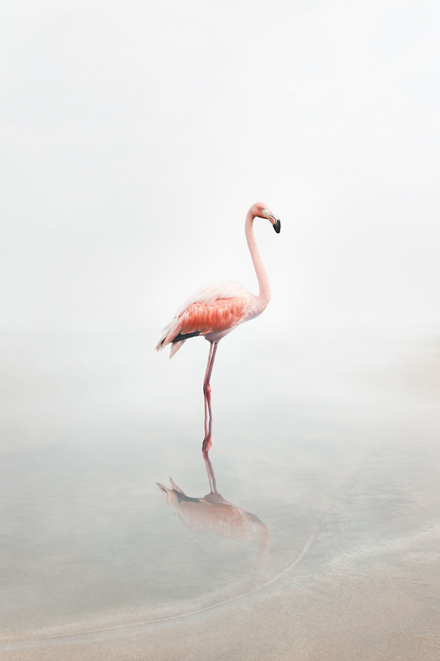 For Now Flamingo
