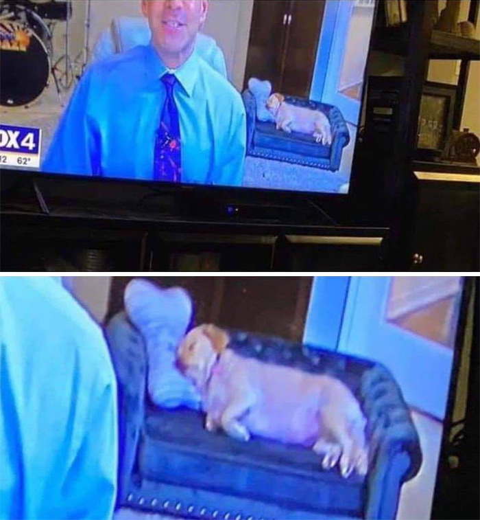 Weatherman Brightens Up People's Days By Letting His Pets Hang Out In The Background During Broadcasts