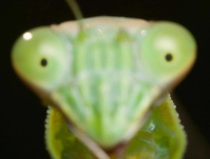 Out Of Focus Mantis Looks Like Cracked Out Mantis