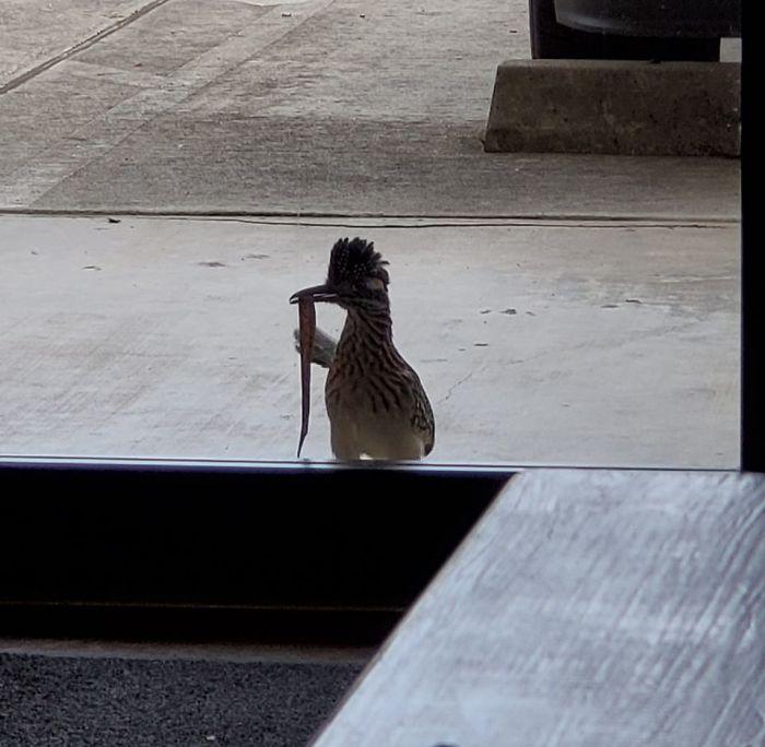 Llama a la puerta casi todos los días y nos trae bichos y reptiles
