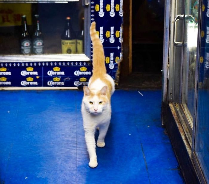Convenience-Store-Cats