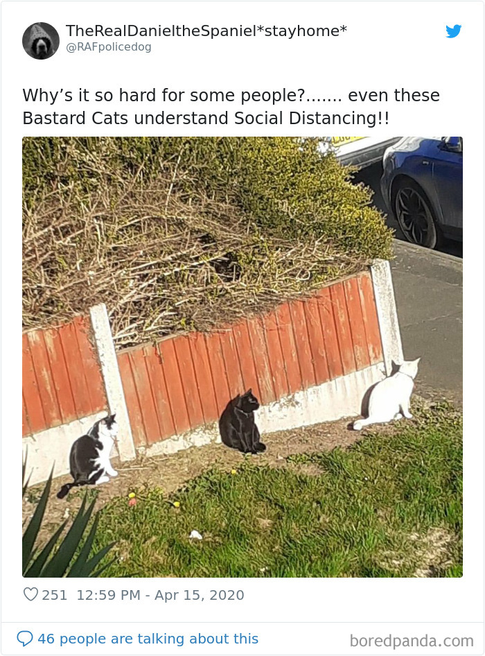 Clever Cats