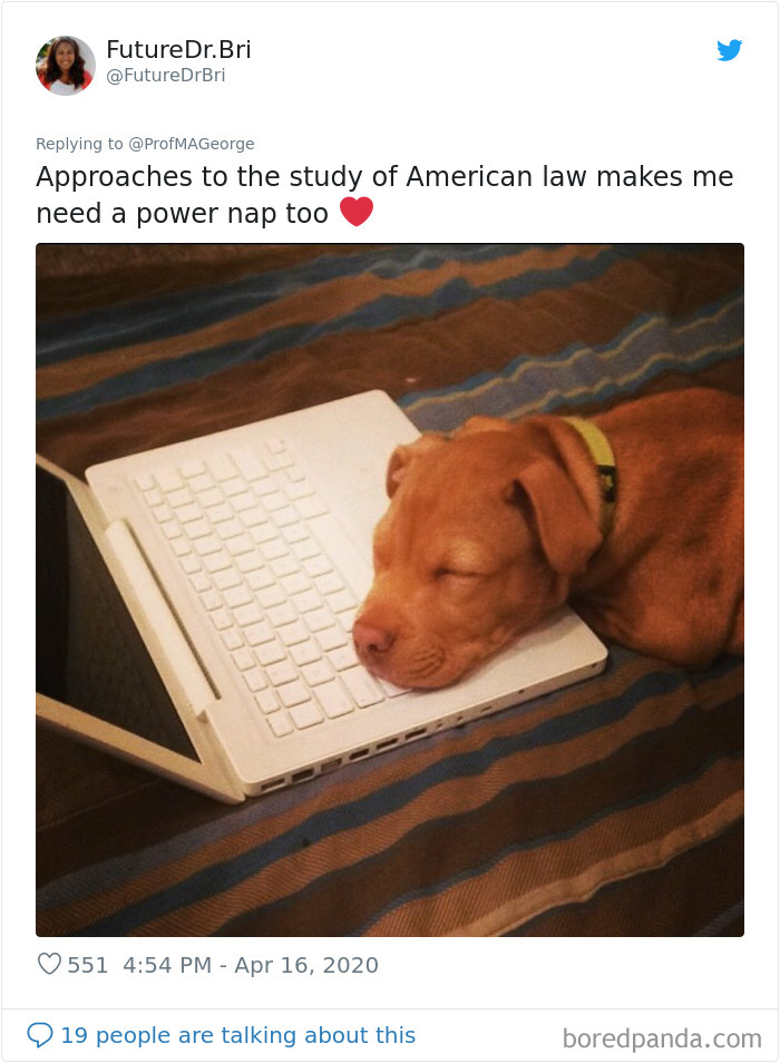 Students-Share-Photos-Pets-Doing-Class-Work