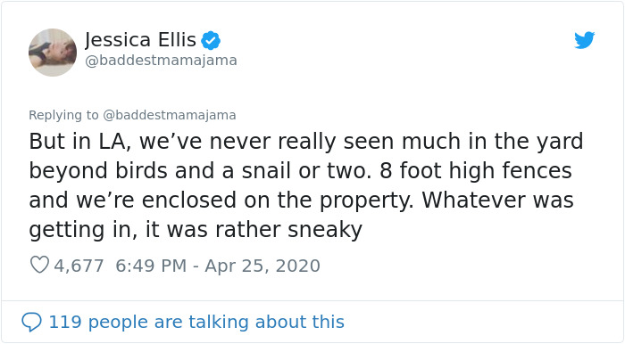 Woman Tries To Get Rid Of Pill Bugs With Beer Traps, Finds Out She Has Been Getting A Lizard Drunk