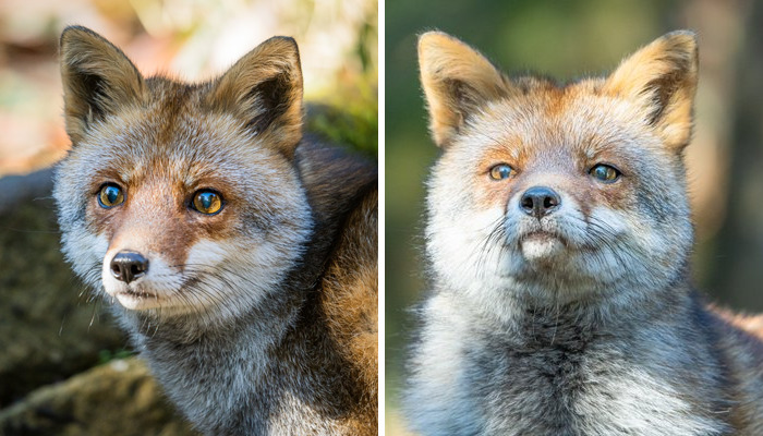 These 20 Animals Show How Exactly We Look Without Contact Lenses