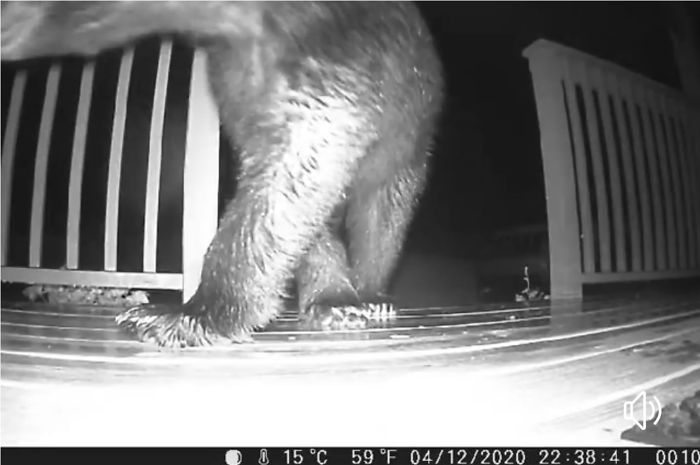 Put A Trail Cam At Floor Level By The Front Door To See The Feral Cat We Thought We Were Feeding. Will Never Go Out That Door After Dark Again