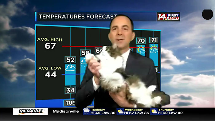 This Weatherman Starts Working From Home, Goes Viral After Cat Joins His Broadcast