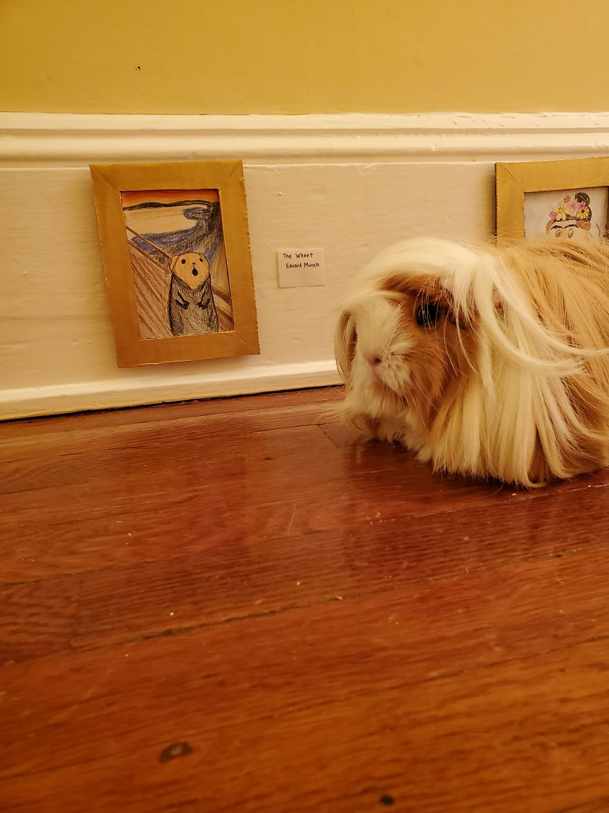I've Made A Fine Art Museum For My Guinea Pig, And She Seems To Have Enjoyed It