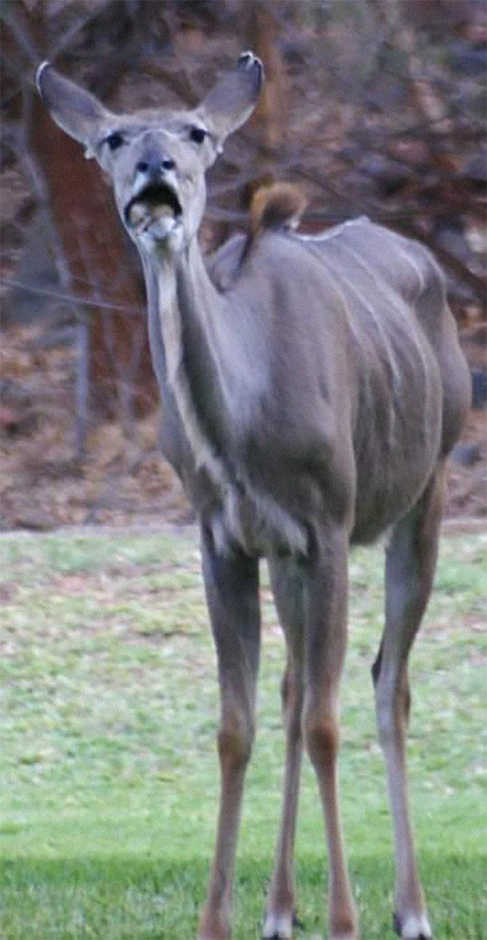 Adorable kudu en Sudáfrica