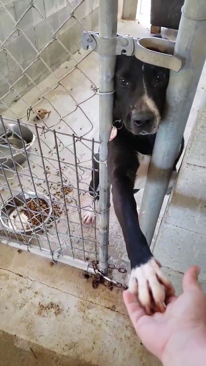 This Friendly Doggo Likes To Hold Hands With People Passing By His Kennel