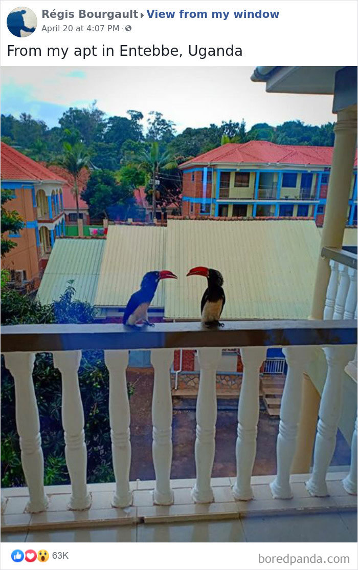 Outside-My-Window-Pics