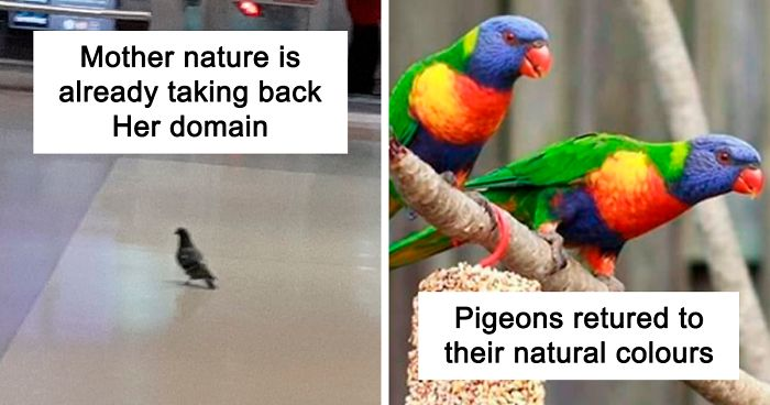 "30 Funny Posts Of ""Wildlife Returning' To Nature As Humans Are ..."