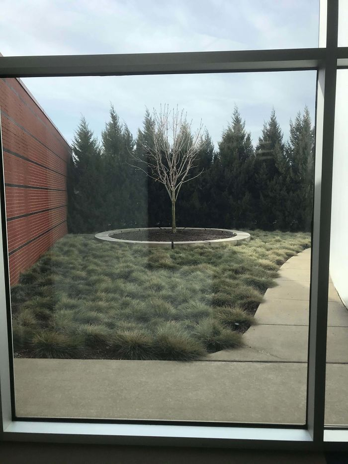 The Holocaust Memorial Museum In Detroit Has A Tree Made From The Sapling Of Anne Frank's Tree