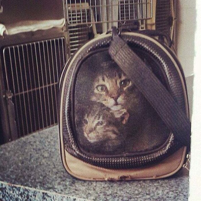 Our Two Cats Look Like They Were Cross-Stitched Onto The Carrier.