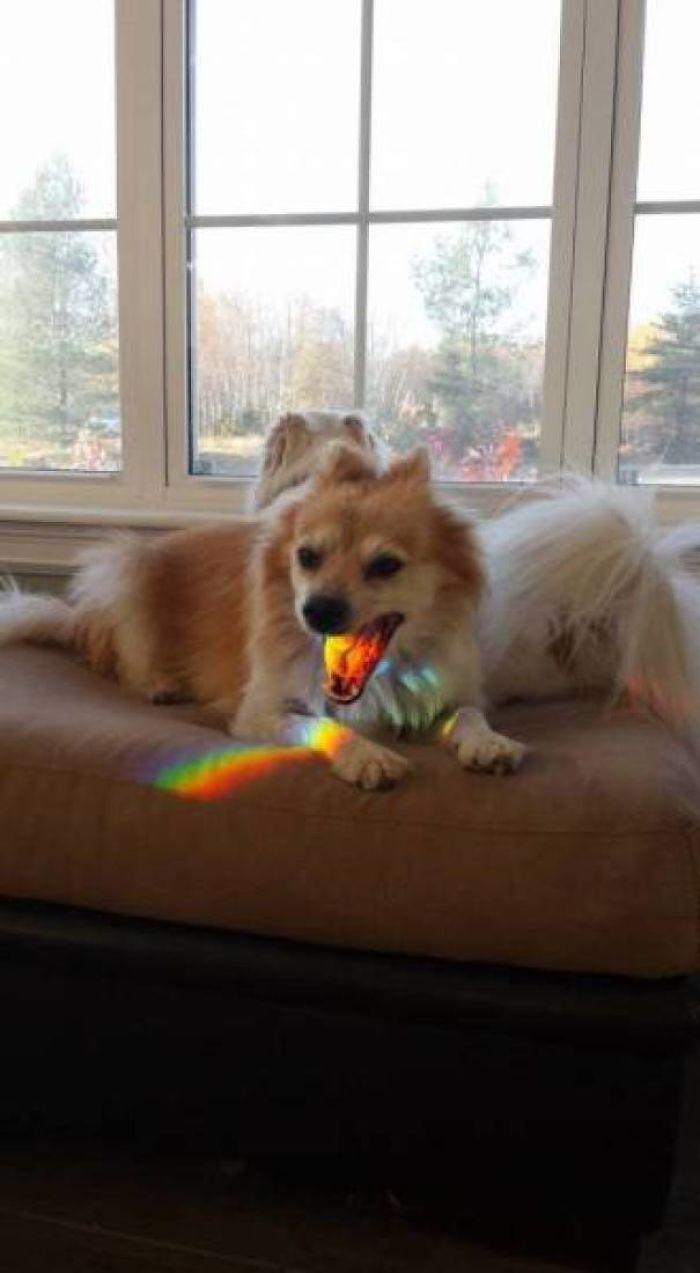 Belching Rainbows