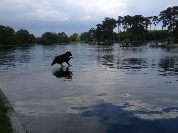 My Dog Looks Like He Is Running On Water