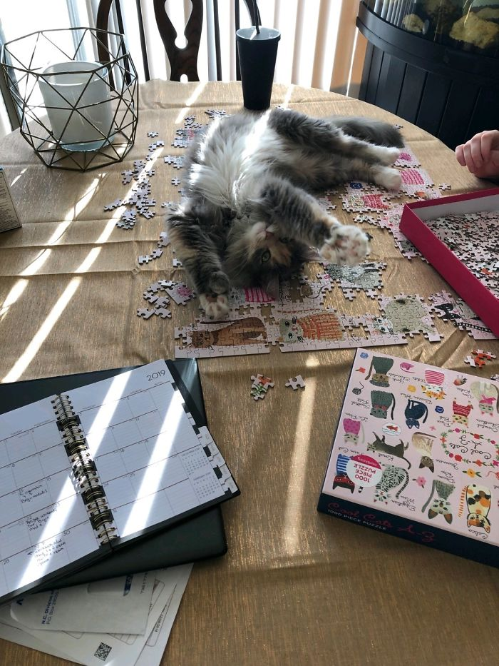 """My Niece's Cat Lucy """"Helping"""" Her With Her Puzzle. Almost A Year Old, She Is The Cutest Little Stinker"""