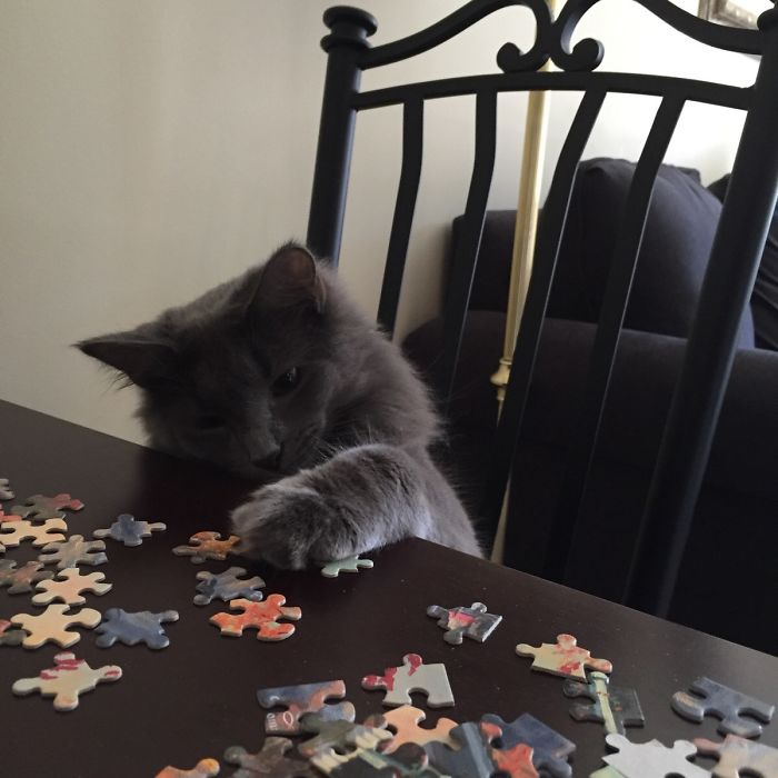 Today We Did A Puzzle