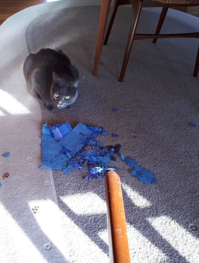 Bad Kitty! He Is Obsessed With Ruining Our Puzzle