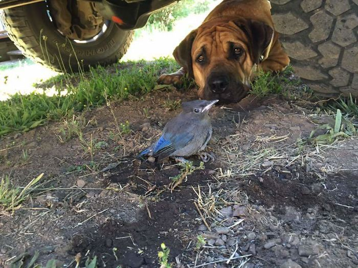He Guarded A Bird With Broken Wing Under My Truck For Four Days Before It Could Fly Off