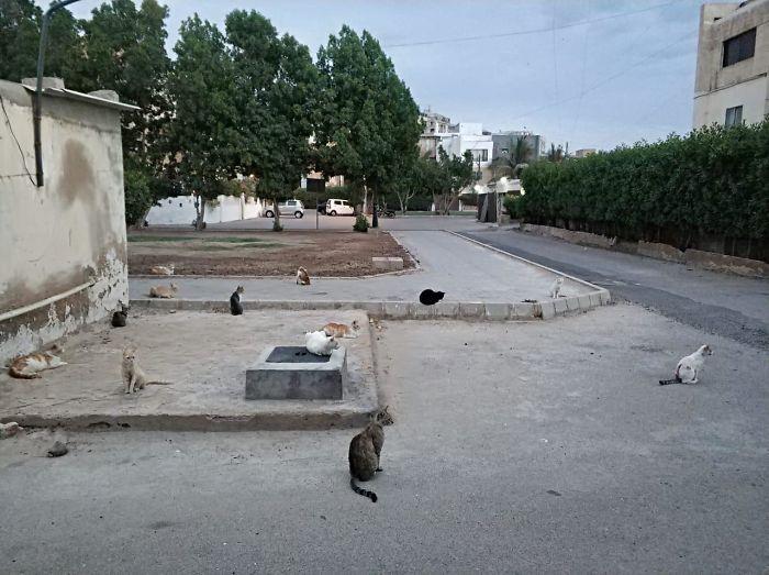 Cats Practicing Social Distancing (Karachi, Pakistan)