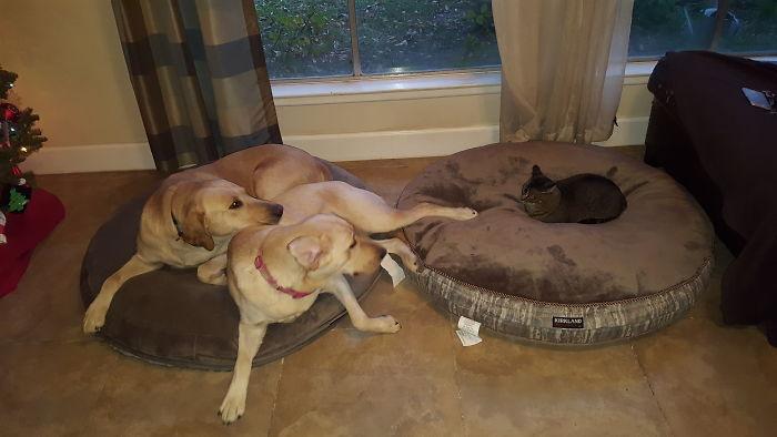 Got New Dog Beds. I Should Have Got Them Some Courage