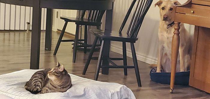 My Smug Cat Really Enjoys My Dog's New Bed