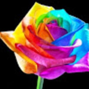 Rainbowfox