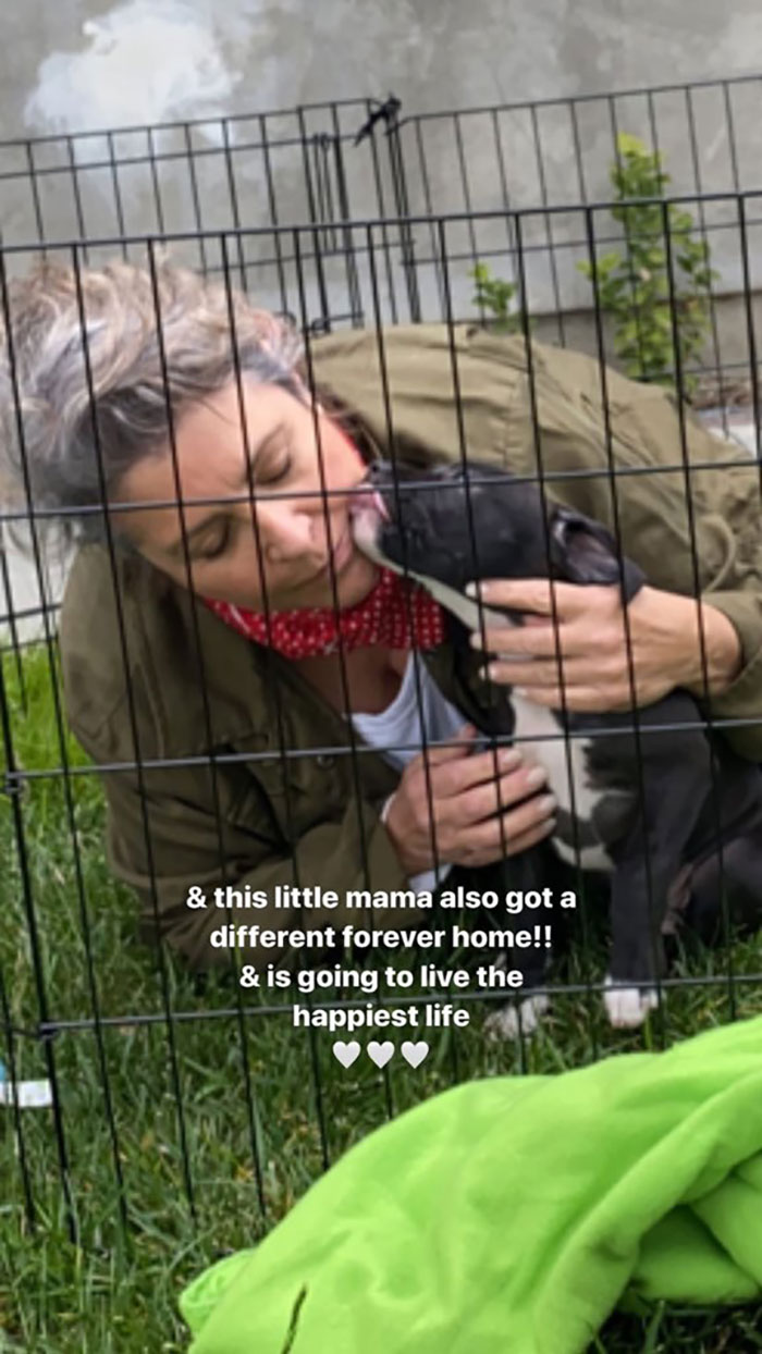 Billie Eilish 'Fails' At Fostering A Pit Bull In Quarantine By Adopting It