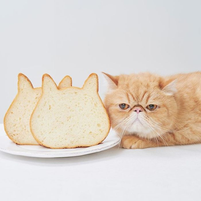 Japanese Bakery Makes Cat-Shaped Breads And They're Just Too Adorable