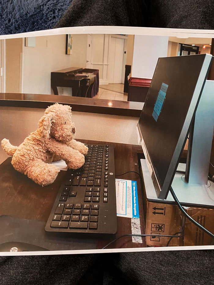 2-Year-Old Girl Loses Her Beloved Stuffed Dog At The Hotel, Staff Documents His Adventures Before Shipping Him Back Home