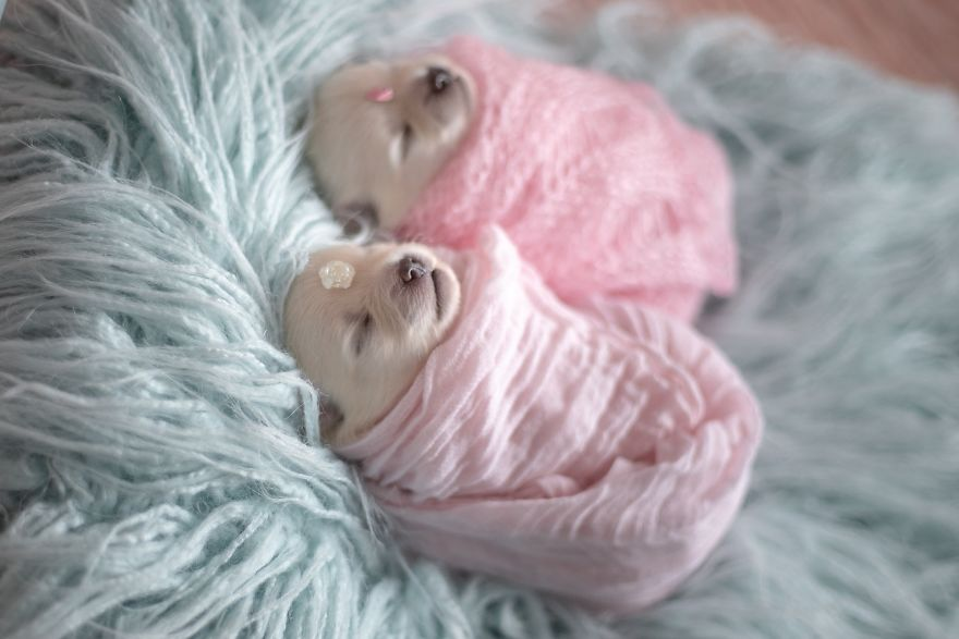 Brazilian Photographer Did The Cutest Photoshoot With Newborn Pups And It Might Melt Your Heart