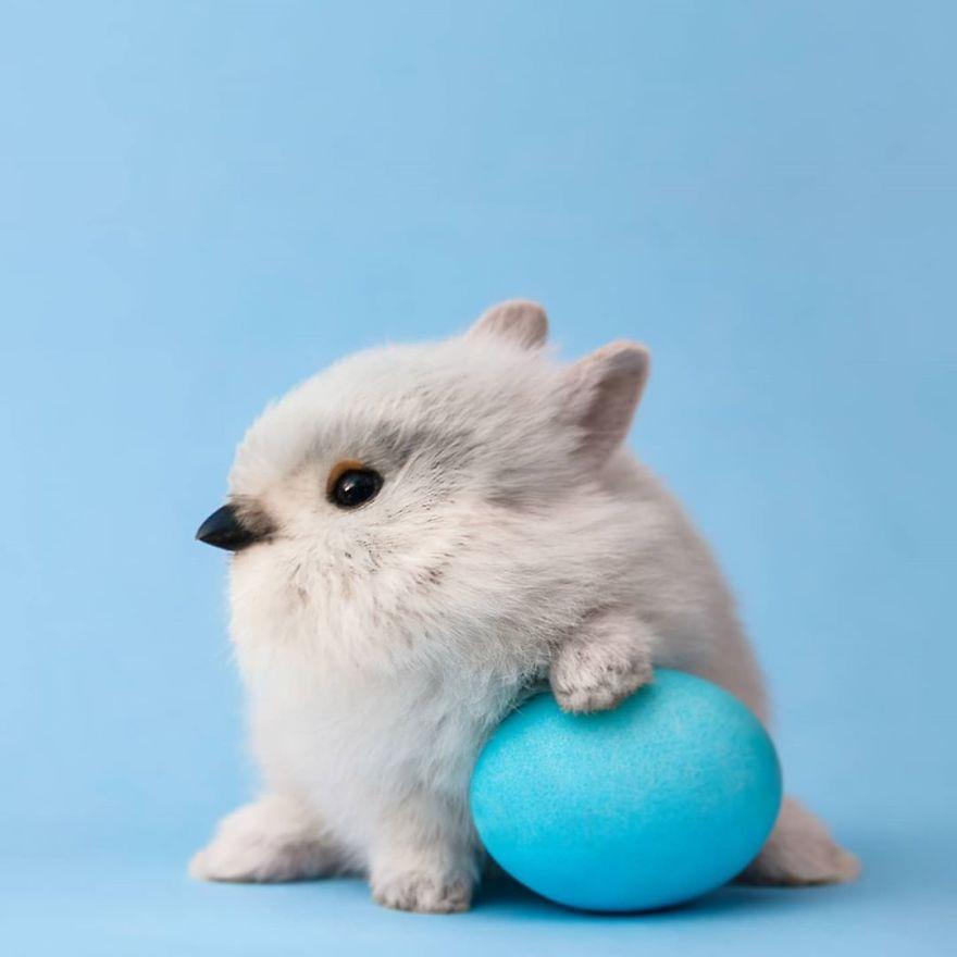 Umjetnik stvara najgluplje životinjske hibride kojih se može sjetiti (26 novih slika)
