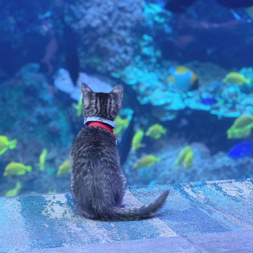 These Kittens And Pups Got To Explore A Giant Aquarium And It's Probably What We All Need In These Dark Times (32 Pics)
