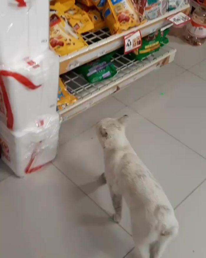 Умная уличная кошка