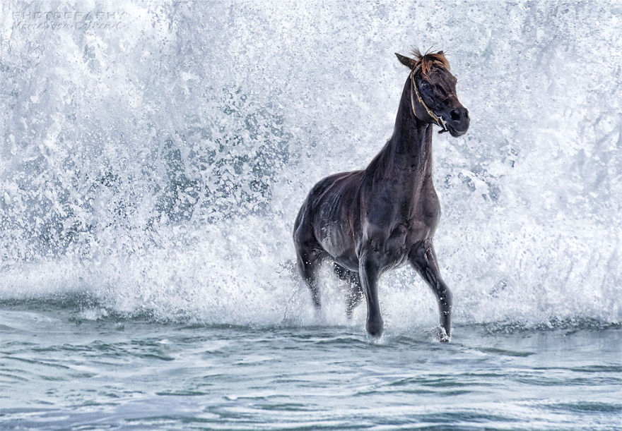 A Horse Would Like To Be A Seahorse