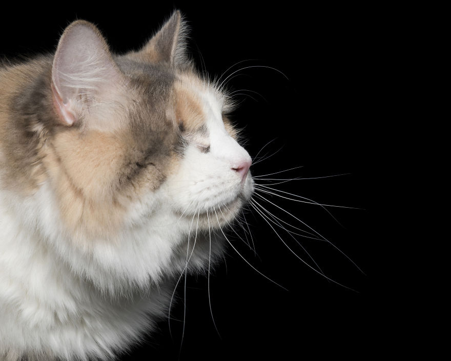 Peaches Were Adopted From Haart And Had Her Eye Removed When She Developed Acute Glaucoma