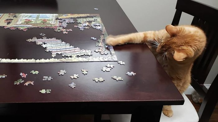 Lots Of Puzzles Happening At Our House! Toby Has Discovered He Likes Doing Them Too