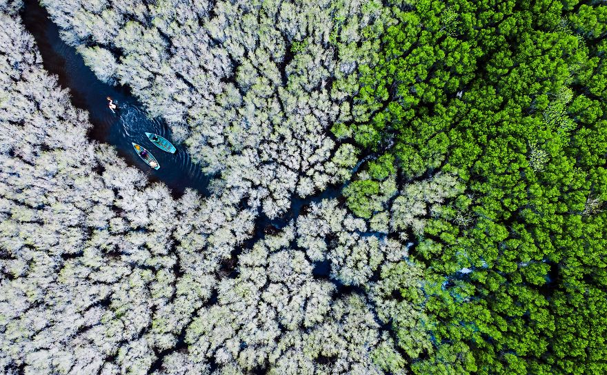 Bau Ca Cai Mangroves