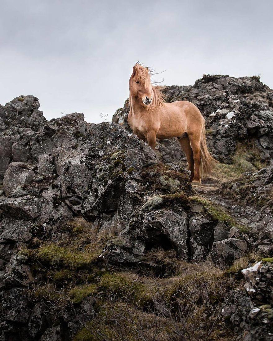 I Photograph Horses In The Breathtaking Icelandic Landscape