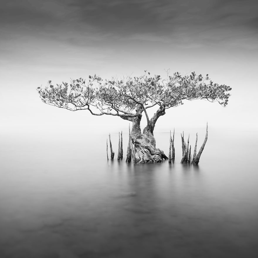 Vision Tree
